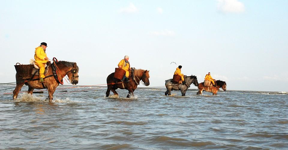 Inventaris Vlaanderen Paardenvissers